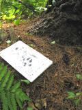 Mink Scat near Mink track