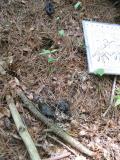 Raccoon Scat (near sticks) and Mink Scat