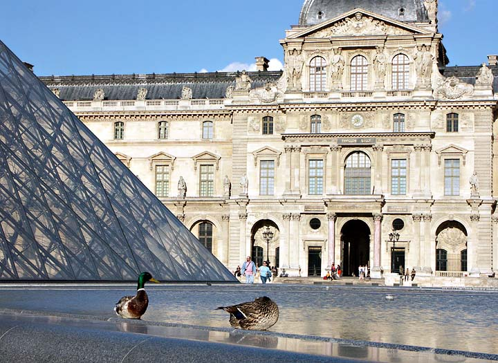 Mallards at the Louvre
