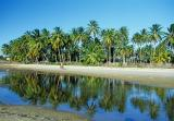 Coqueiral refletido na água com menina passeando de bicicleta na praia do Mundaú