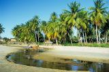 Viçoso coqueiral da praia do Mundaú