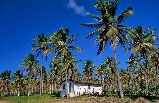Coqueiral em Nísia Floresta.jpg