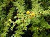 026 Endemic fern.jpg