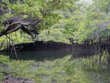 304 Mangrove lagoon.jpg
