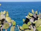 919 Cactus.jpg