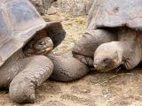 018 Giant Tortoises.jpg