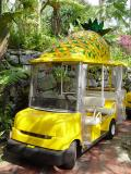 Automatic Pineapple Car