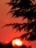 sunset 6/24