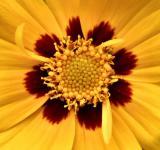 bright yellow macro