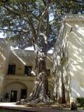 Cool Ammo-Producing Tree