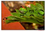 Raindrops on strawberry plantj trujillo