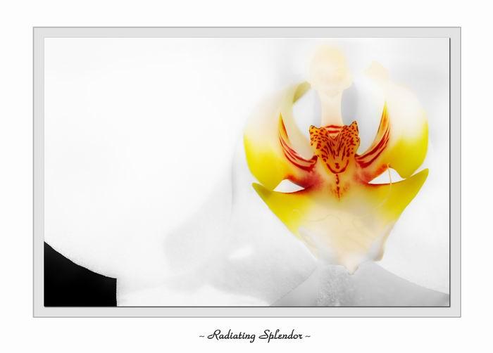 Radiating Splendor<br><i>by Michael Soo</i>