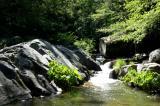 Lewis Creek  18