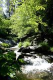 Lewis Creek  2