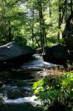 Lewis Creek  5