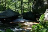 Lewis Creek  52