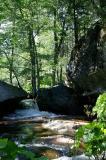 Lewis Creek 53