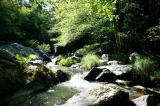 Lewis Creek  3