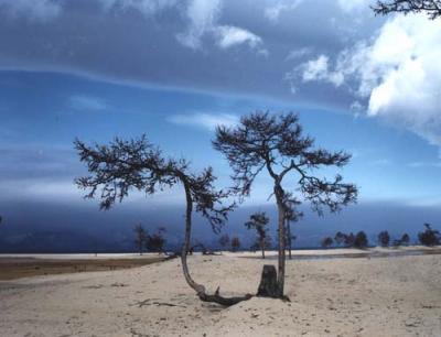Tree near Lake Baikal