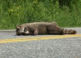 Roadkill Revisited