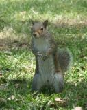 Acting Squirrely