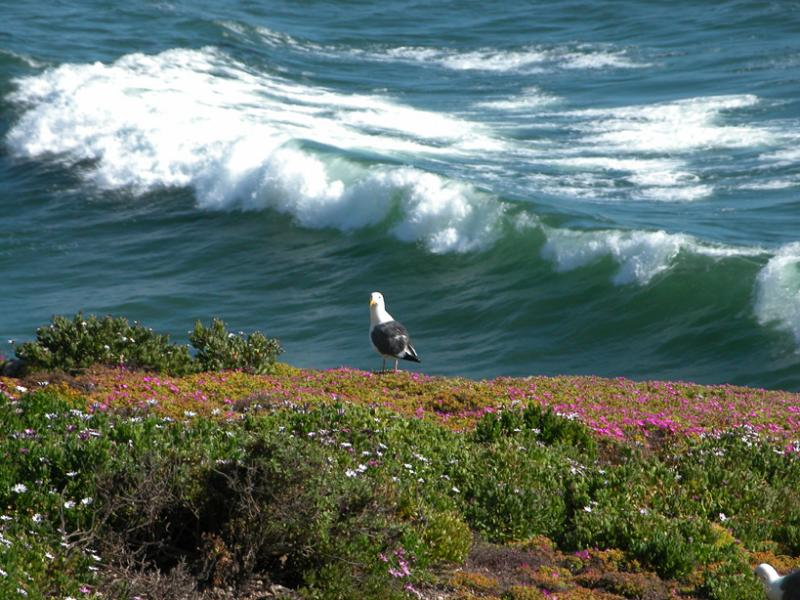Seagull in Pismo Beach, CA