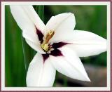 6-26-04e - Fleur de ??