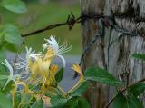 6/16/04 - Fence Row Flowers