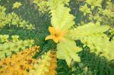 7/2/04 - Day Lily Zoom