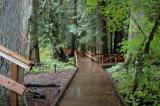 Boardwalk into Grove