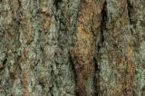 Brown and Green Bark Texture