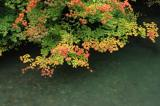 View of Leaves from Bridge