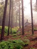 Madeiran forest-2