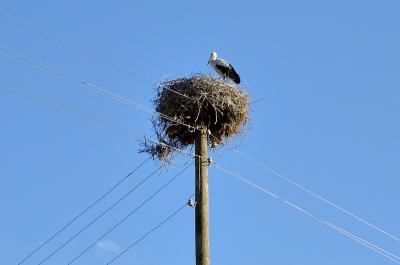 Storks eye view