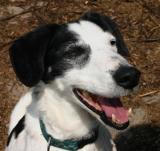 Joop's Dog Log - Monday June 14