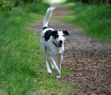 Joop's Dog Log - Wednesday June 16