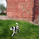 Joop's Dog Log - Sunday June 20