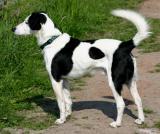 Joop's Dog Log - Tuesday June 22