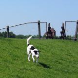 Joop's Dog Log - Wednesday June 23