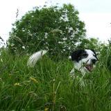 Joop's Dog Log - Thursday June 24