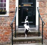 Joop's Dog Log - Friday June 25