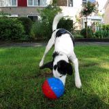 Joop's Dog Log - Sunday June 27