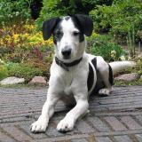 Joop's Dog Log - Monday June 28