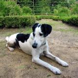 Joop's Dog Log - Thursday July 01