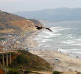 IMG_9650 coast.jpg