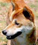 IMG_0387 dogs.jpg