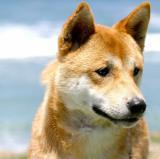 IMG_0388 dogs.jpg