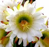 IMG_0943 flowers.jpg