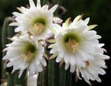 IMG_0942 flowers.jpg