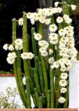 IMG_0944 flowers.jpg